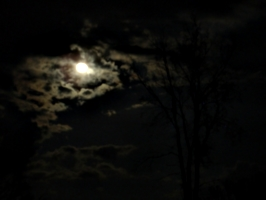 [picture: Moons, Clouds, Tree 3]