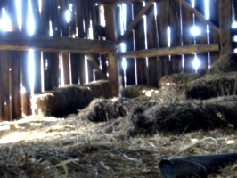[picture: Straw bales inside a barn]