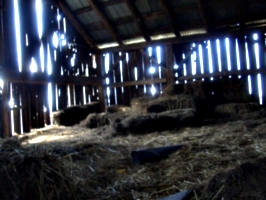 [picture: Straw bales inside a barn 2]