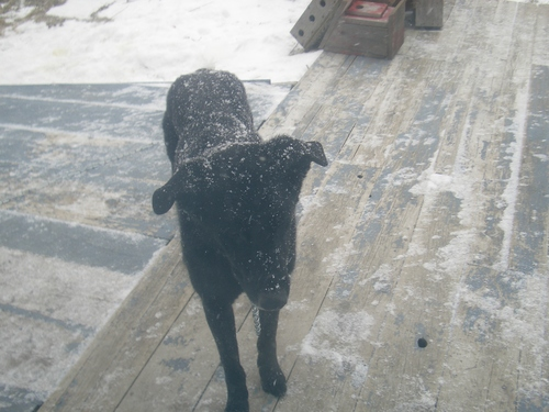 [Picture: Rueben the Dog in the Snow]