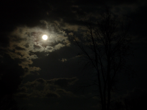 [Picture: Moons, Clouds, Tree 2]