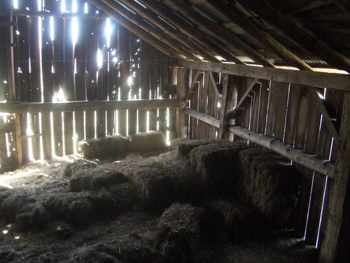 [Picture: Inside an old barn 8]