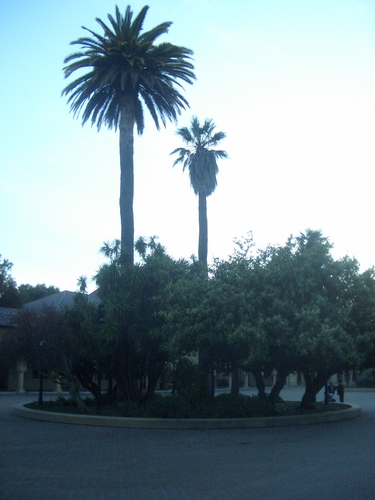 [Picture: Palm tree traffic circle]