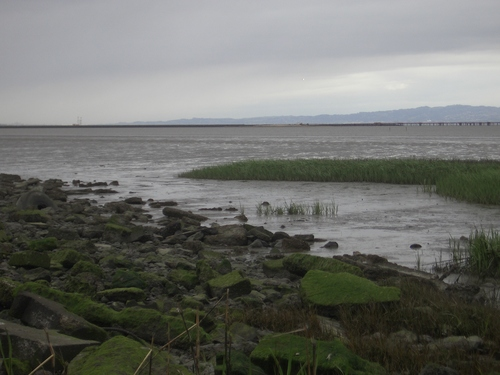 [Picture: Marshy inlet 2]