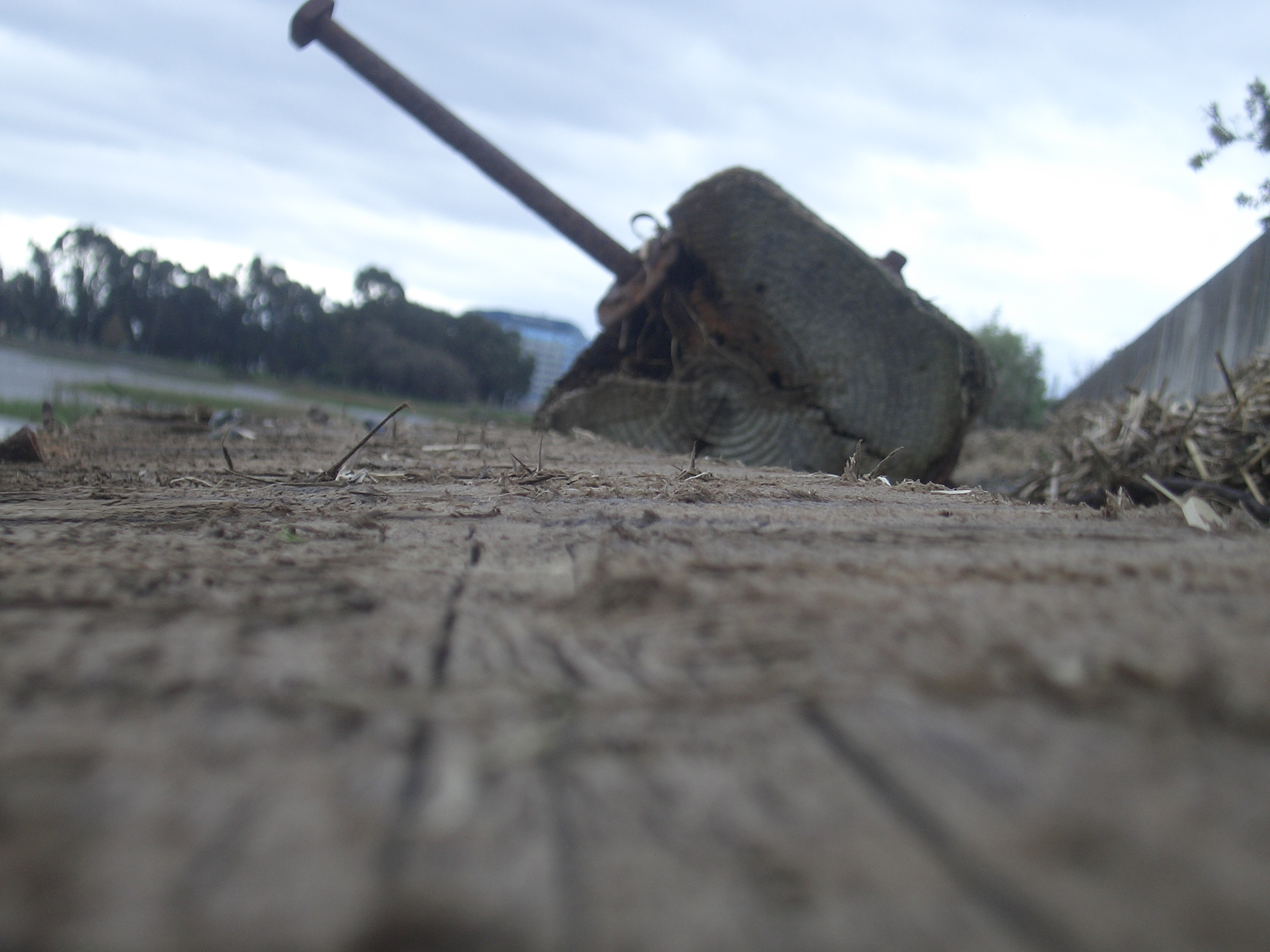 [Picture: Driftwood]