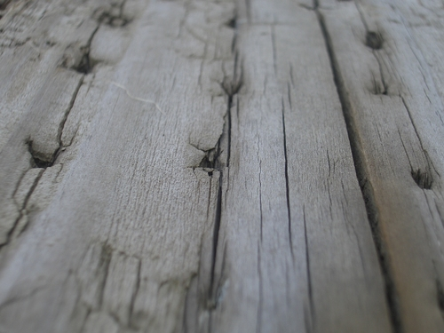 [Picture: Driftwood 3: nail holes]