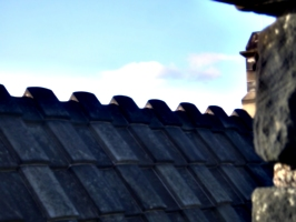 [picture: Roof]