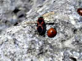 [picture: Ladybirds 9]