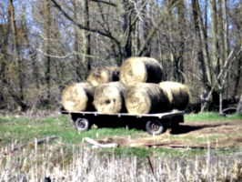 [picture: Hay cart]