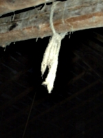 [picture: Rope in the barn 3]