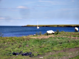 [picture: Sheep and boat]