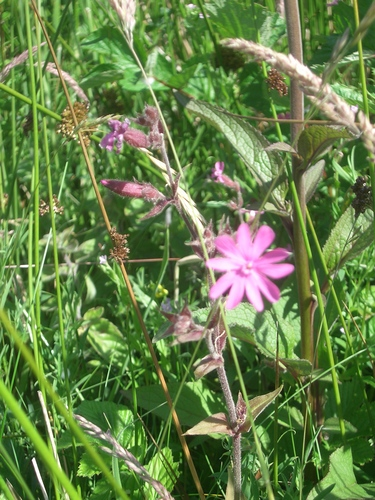 [Picture: Wild flowers and grasses]
