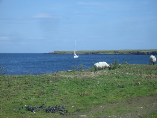 [Picture: Sheep and boat 2]