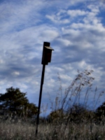 [picture: Birdhouse]