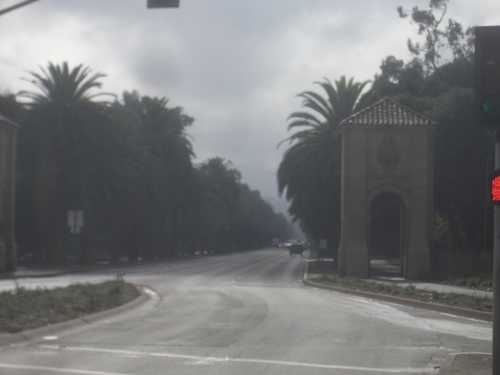 [Picture: Stanford Campus: the avenue]
