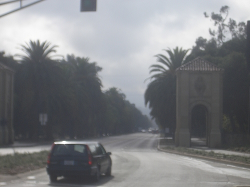 [Picture: Stanford Campus: the avenue: 2]