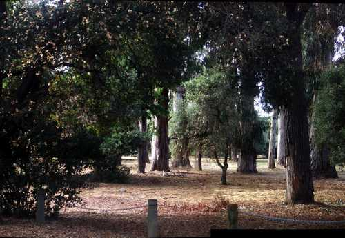 [Picture: Stanford Woods]