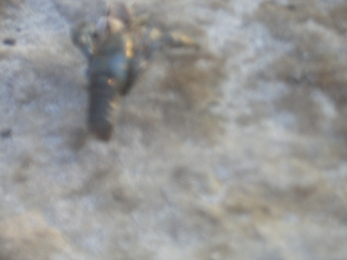 [Picture: Blue blurry shellfish 2]