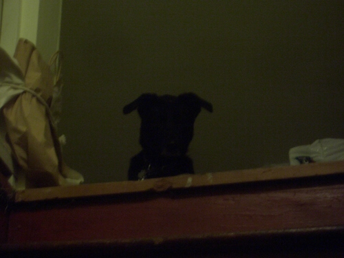 [Picture: Dog at the top of the stairs]
