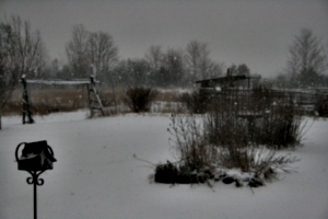 [picture: Snow in the Garden 3]