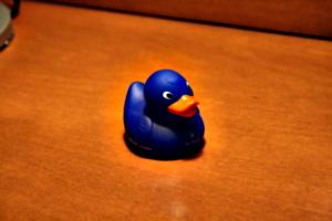 [picture: Hilton Duck]