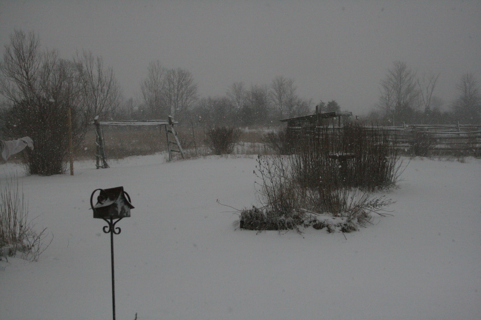 [Picture: Snow in the Garden 1]
