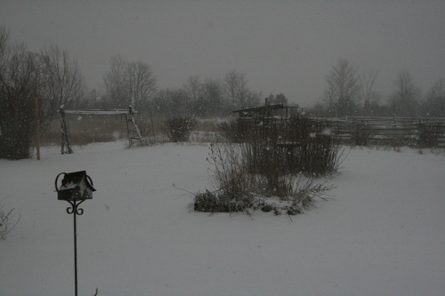 [Picture: Snow in the Garden 2]