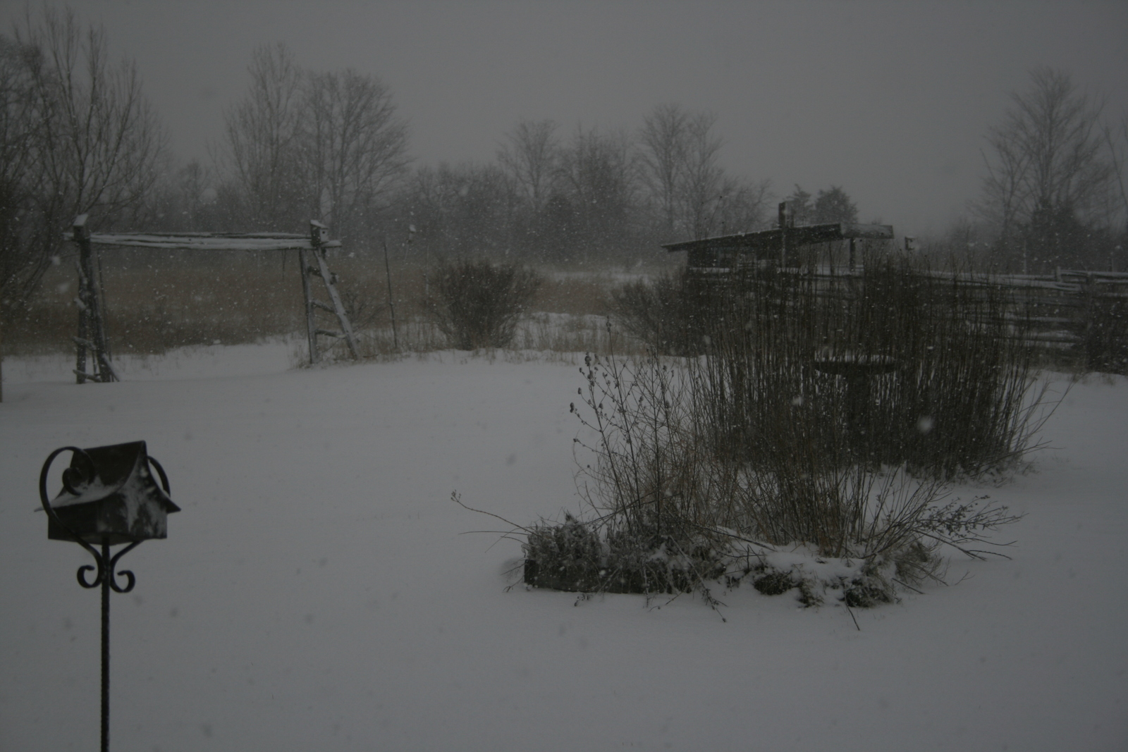 [Picture: Snow in the Garden 4]
