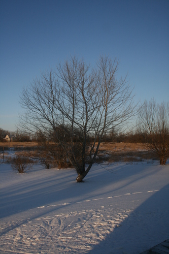 [Picture: Winter Tree]