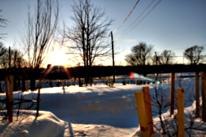 [picture: Landscape of Winter Trees 1]