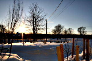 [picture: Landscape of Winter Trees 6]