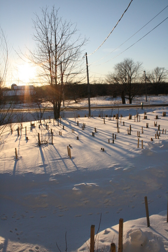 [Picture: Landscape of Winter Trees 3]