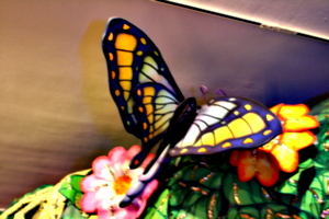 [picture: Another giant butterfly 1]