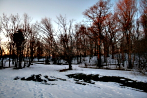 [picture: Evening Winter Trees 2]