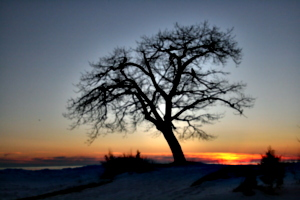 [picture: Point Petre Tree in Winter at Sunset 2]