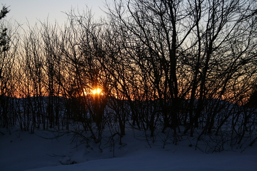 [Picture: Evening Winter Trees 3]