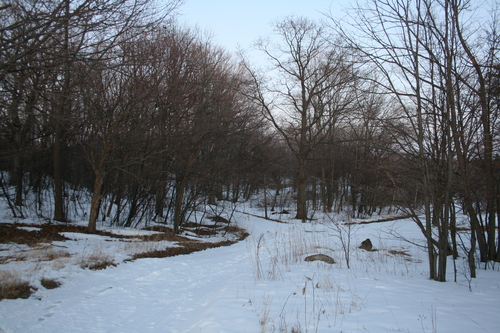 [Picture: Winter forest]