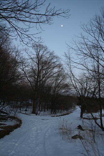 [Picture: Winter forest with moon 1]