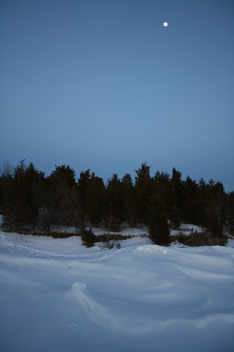 [Picture: Winter trees 1]