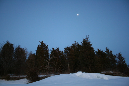 [Picture: Winter forest with full moon 2]