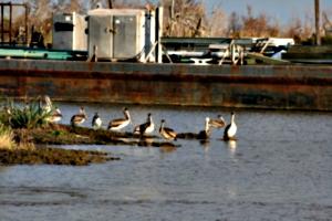 [picture: Birds 1]