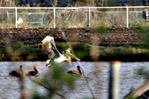 [picture: Birds 2]