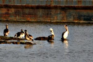 [picture: Birds 3]