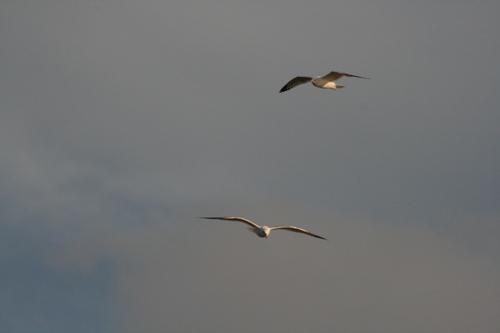 [Picture: Birds in flight]