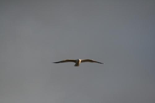 [Picture: Bird]