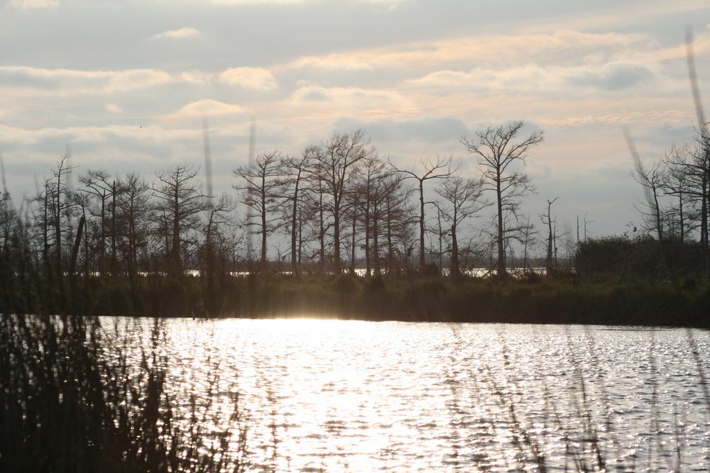 [Picture: Louisiana Sunset 1]