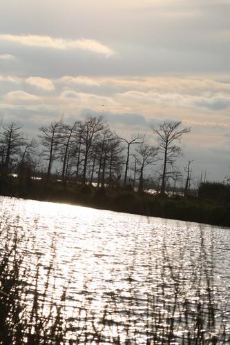 [Picture: Louisiana Sunset 2]