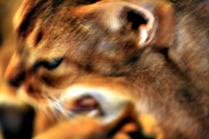 [picture: Yawn with motion blur]