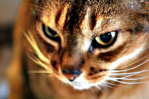 [picture: mmmm sharp kitty]