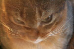 [picture: Under-exposed Cat]